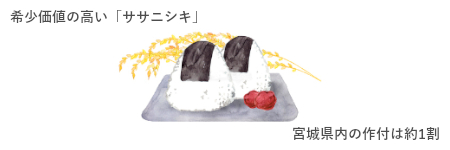 復活ササニシキの秘密③